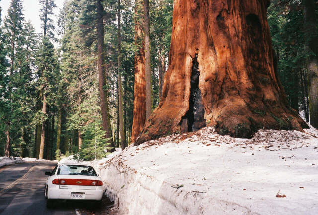 Parked next to a Sequoia, Sequoia National Park